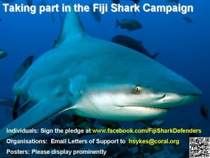 How to help sharks in Fiji