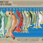 Don't eat Fiji's Future – Fiji fisheries